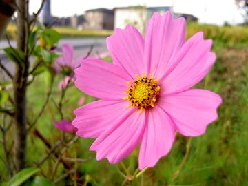 Morningflower03