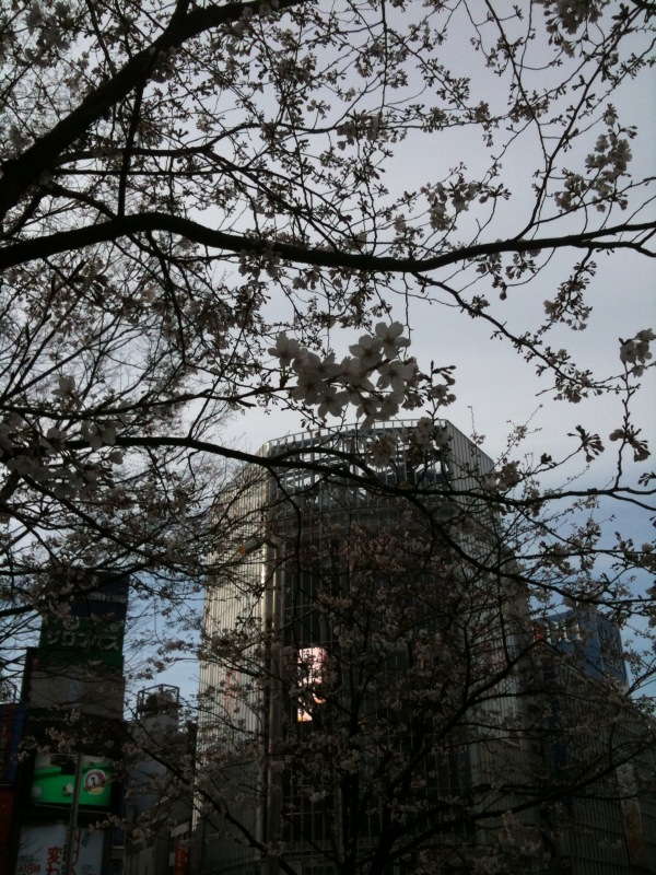 都内は桜が